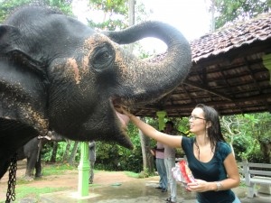 feeding an elephant in sri-lanka