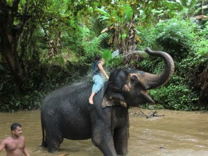 Getting a shower by elephant in sri-lanka