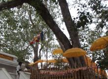 Sri Maha Bodiya Anuradhapura