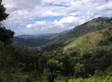 The verdant Knuckles Range.