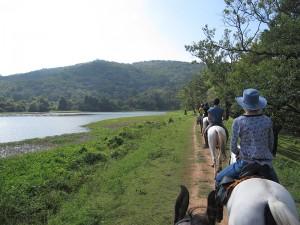 Exploring a bird sanctuary on horseback.