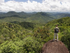 The spectacular Sinharaja: the last remaining pristine rainforest in Sri Lanka.