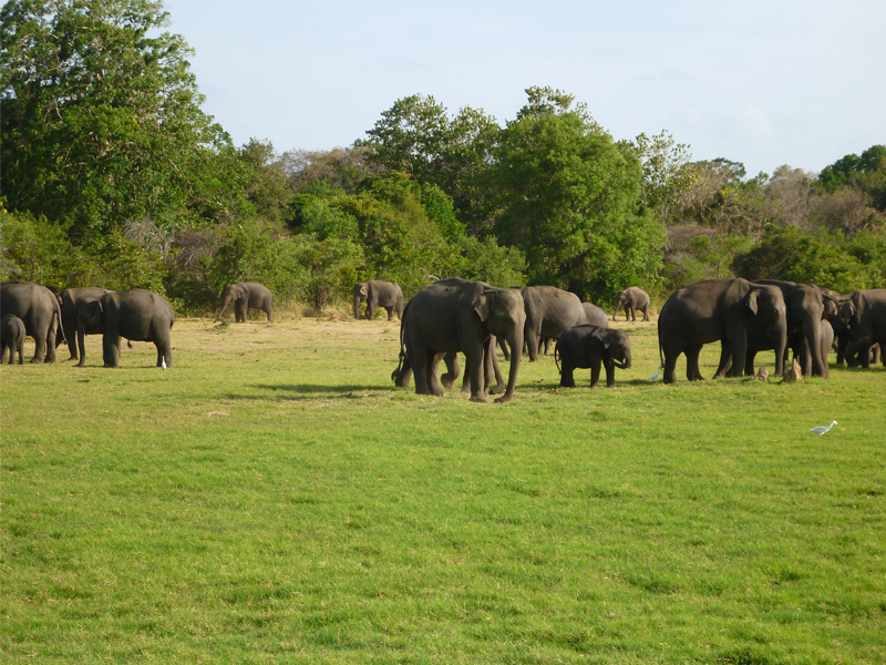 elephants gathering