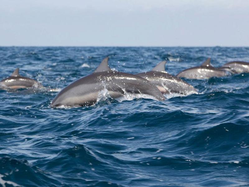 Dolphins Kalpitiya