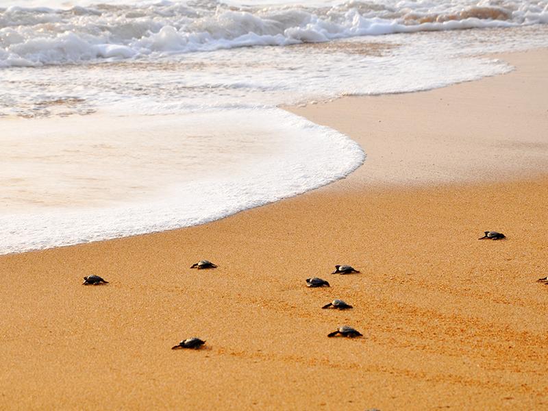 Rekawa Turtles